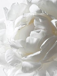 ...white | Flowers and floral arrangements | Pinterest