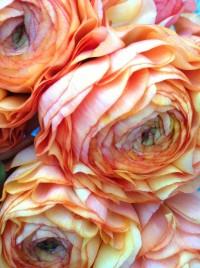 Ranunculus | Flowers | Pinterest