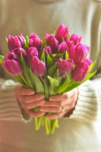 tulips | FLORS I PLANTES | Pinterest