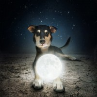 Help Dogs with Images by Sarolta Ban   Fine Art Photography