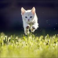 500px / Kitty by Maris Ojasuu