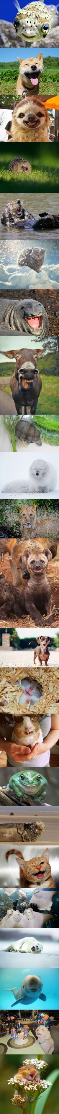 The happiest animals in the world. - 9GAG