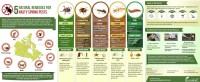5 Natural Remedies for 5 Nasty Spring Pests -