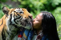 Kissing-tiger.jpg (JPEG Image, 2197 × 1463 pixels) - Scaled (46%)