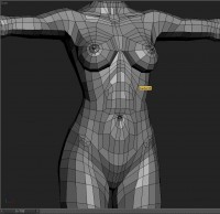 Body model - Polycount Forum