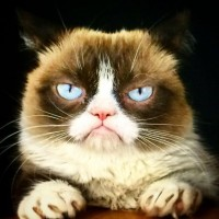 Zdj?cia z telefonu - The Official Grumpy Cat