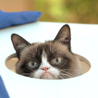 Zdj?cia na osi czasu - The Official Grumpy Cat
