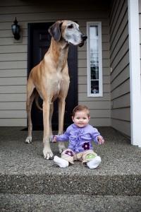 7172060-R3L8T8D-650-cute-big-dogs-and-babies-35.jpg (??????????? JPEG, 650×974 ????????) - ???????????????? (65%)