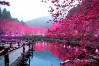 sakura pond taiwan - Bing Images
