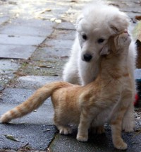 21 Cuddly Cat And Dog Best Friends To Make You Squee