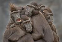 25 De Las Mejores Fotos De Animales En La Naturaleza | Upsocl