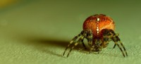 500px / Spider by simc