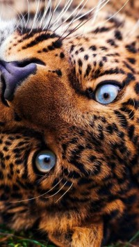Awesome leopard | PHOTO-LAB | Pinterest