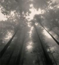 everythingallatonce / trees