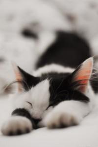 Dulces sueños | Kiut | Pinterest