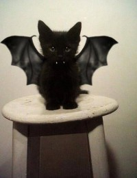 Pin de Keely Gifford en cats | Pinterest