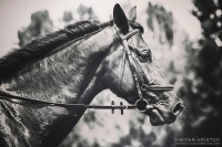 Black and White Horse Art Portrait - 54ka [photo blog]