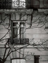 Michael Wolf Photographs The Shadows of Trees In A Film Noir Style - The Fox Is Black