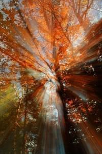 Dreamy Autumn Morning | Autumn Looks | Pinterest