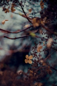 Sarah Prall ???????? ??? ? ????? Autumn | Pinterest