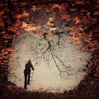 et des perchés aussi... | Autumn | Pinterest