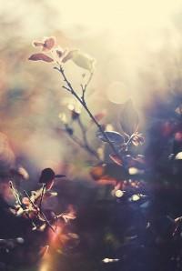 Sarah Prall ???????? ??? ? ????? Autumn | Pinterest