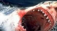 Over haaien en innovatie | Marketing online