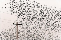 Bird Migration | Flickr - Fotosharing!