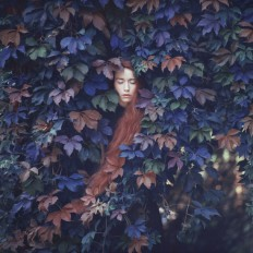 Flower power / oprisco photography - portfolio