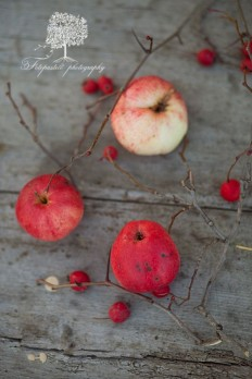 Apple ? | Autumn | Pinterest
