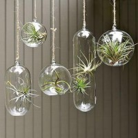 In my home....someday / Shane Powers Hanging Glass Bubble Collection ($20-50) - Svpply