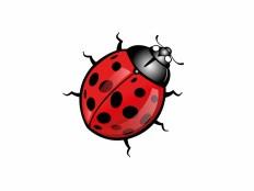 Ladybug Vector File - VECTOR ELEMENTS - Animals : LogoWik.com