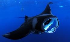 Sheraton Kona Shore Dive | Surf-Kona Blog