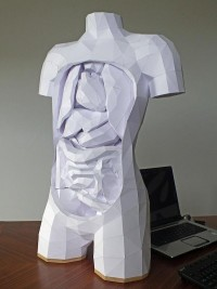 Geometric Paper Torso with Removable Organs | Colossal