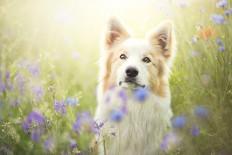 Zmys?owa fotografia psów | Alicja Zmys?owska - CzytajNiePytaj - Magazyn Online. Sztuka, Moda, Design, Kultura