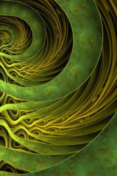 patterns. spirals. | Nature and Patterns | Pinterest