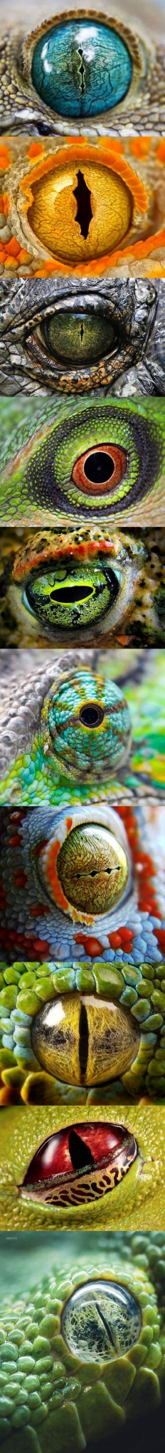 animal eyes | Nature and Patterns | Pinterest