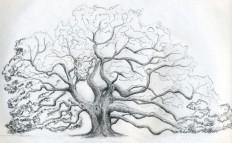 draw tree - Pesquisa do Google