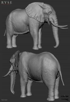 elephant_zb_brunocamara.jpg (1711×2500)
