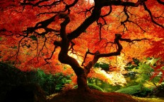 Autumn Forest - Photography Wallpapers