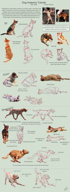 Dog Anatomy Tutorial 3 by SleepingDeadGirl on DeviantArt