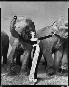 Richard-Avedon-Dovima-with-Elephants.jpg (2100×2621)