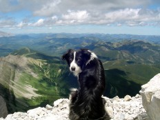 Dogs don't give a shit about great views - Imgur