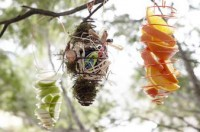 Tips for Attracting Birds | Garden Activity Ideas | Home Made Simple
