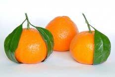 Mandarin Oranges (Citrus Reticulata) - Commons:Featured pictures/Food and drink - Wikimedia Commons