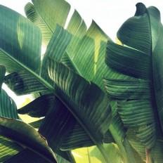 Plants / SHUT UPPP