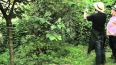 Besoin d'un jardinier? SeFaireAider.com - YouTube
