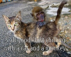 Make It Interesting - Online Casino: Top 10 Reasons A Monkey Is a Better Pet Than A Cat or Dog.