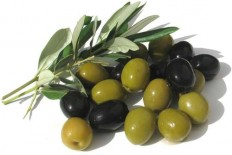 I Love Snowboarding • The Olives - Mediterranean Fruit Crop