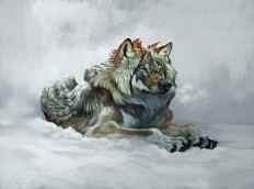 Fluffy winter wolf with video! by ailah on DeviantArt